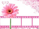 pink flower multi frame