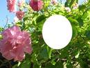 une rose 214