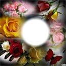 charito- rosas