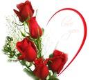 Rp rote Rosen für die Liebe