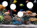 *Aquarium*