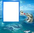cadre dauphins