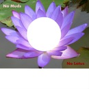 No Muds, No Lotus