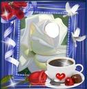 cafe y rosa
