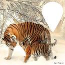 tigre bulle