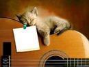 gato-gitarra