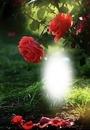 Cc Rose rosa