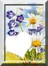 fleurs des champs  1073