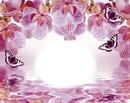 Orchidées-papillons-fleurs-nature
