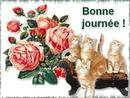 bonne journée avec chats et roses 1 cadre photo