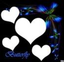papillons bleu nuit