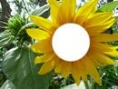 ô sol ô mio