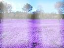 paisagem purple
