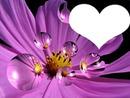 coraçao do seu amor