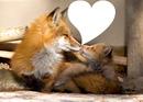 Renard et Amour