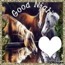 Goodngiht Horses
