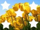 la tête dans les tulipes