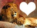 leones dulces