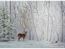 biche forêt neige