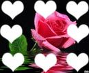 Le coeur de la fleure