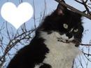 chat blanc noir