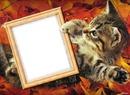 Cadre automne avec un chat