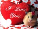 mignon hamster