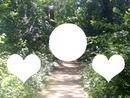 coeur en foret