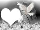 bebe colombe