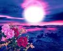 pink skys