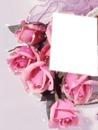 cadre roses