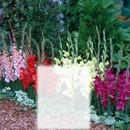 Flores Multicores
