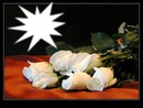 la rose blanche 02