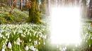 gyönygyvirág erdő