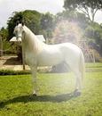 caballo de guardatinajas