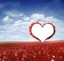 Arbre de l'amour