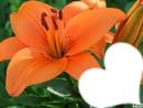 La fleure de ta peau