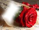 rosa brillante