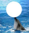delfin y mar