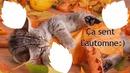 chat d'automne 3 photos