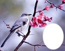 Oiseau sur branche en fleurs