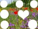 fiori e foto