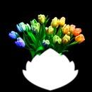 tulipes multicolore