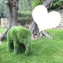isabella éléphant