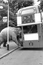 un elephant dans un bus