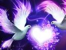 Friedenstauben halten Herz