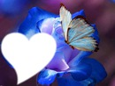 Rosa Y Mariposa Azul