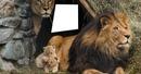 familia de leão