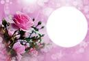 Flower & Circle