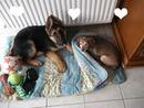 Mon chien Inouk <3 et ma chienne Fifi